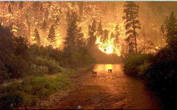 Photo credit: John McColgan, BLM, Alaska Fire ServicePhoto credit: John McColgan, BLM, Alaska Fire Service